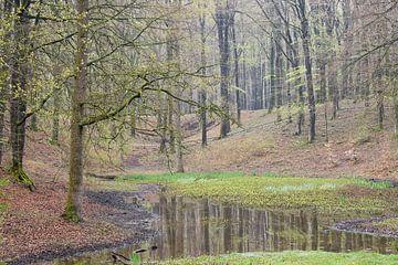 Leemkuil in het bos