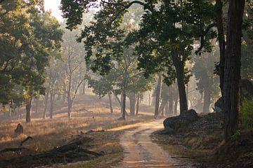 Schöner sonniger Wald, Lichtstrahlen schräg von Michael Semenov