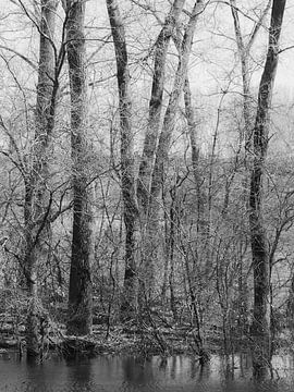 Winterbäume von Diane van Veen
