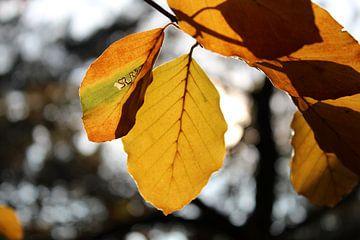 Herfst blad van Jop Fotografie