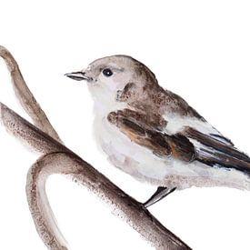 Deze Bonte Vliegenvanger Vogel illustratie van Angela Peters