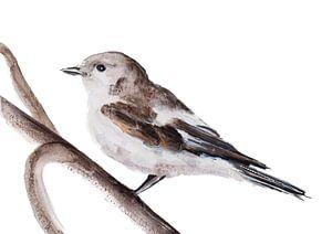 Diese Pied Flycatcher Vogel Illustration