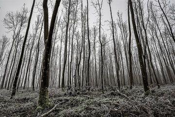 Waldbäume von Robin van Maanen