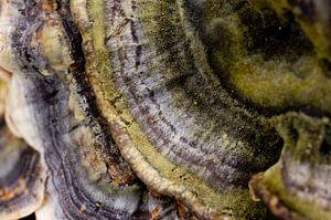 mushroom abstract