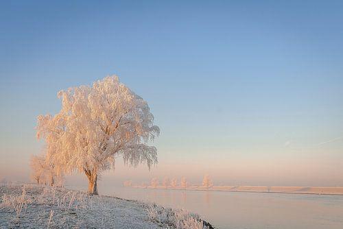 Winter aan de maas van