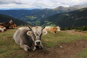 Koeien in bergweide Italie van Paul Franke