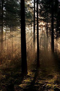 Herfst in het bos van Joost de Groot