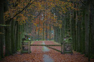 Statige entree van een romantisch park in de herfst van Patrick Verhoef