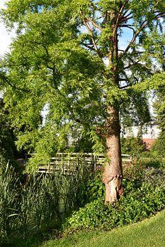 Baum mit Holzbrücke_HMS