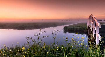 Mistige ochtend in de polder van Rob IJlst