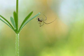 Spin doet aan acrobatiek. van Astrid Brouwers
