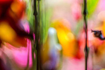 Kleur!02 van Simone Langeweg