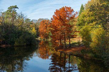 Herbst im Wanderwald von Tilburg von Leo Kramp Fotografie