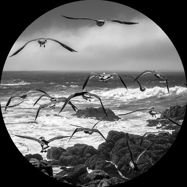 Pacific Coast van Wim Slootweg