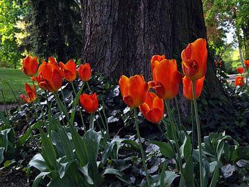 Frühjahr van Isa Bild