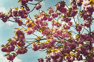 Bloesems roze 03 van FotoDennis.com