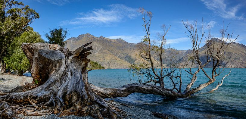 Tree lake van Ton de Koning