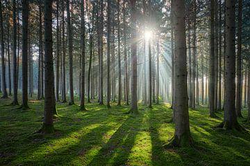 Im Sonnigen Wald von Silvio Schoisswohl