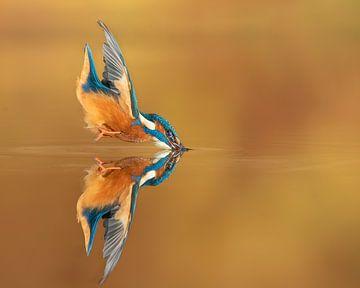 Das perfekte Spiegelbild... von Wim Hufkens