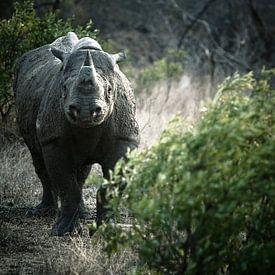 Black Rhino von Jasper van der Meij