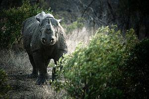 Black Rhino van