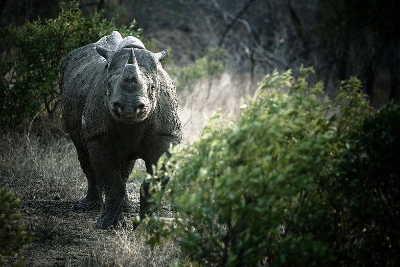 Black Rhino van Jasper van der Meij