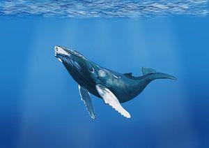 Bultrug walvis in de oceaan van