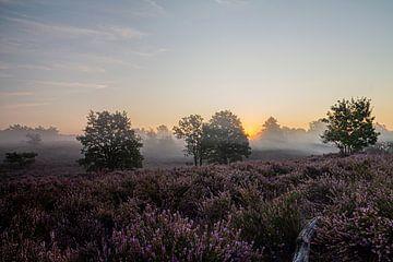 Magischer Sonnenaufgang auf der Mechelse Heide (Belgien) von Debbie Kanders