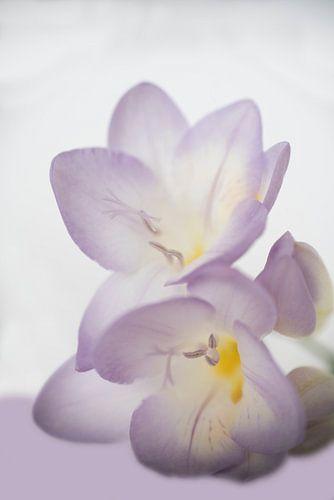 Lila bloem van Birgitta Tuithof