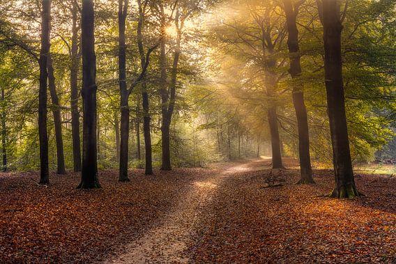 Op zoek naar het licht in een herfstbos