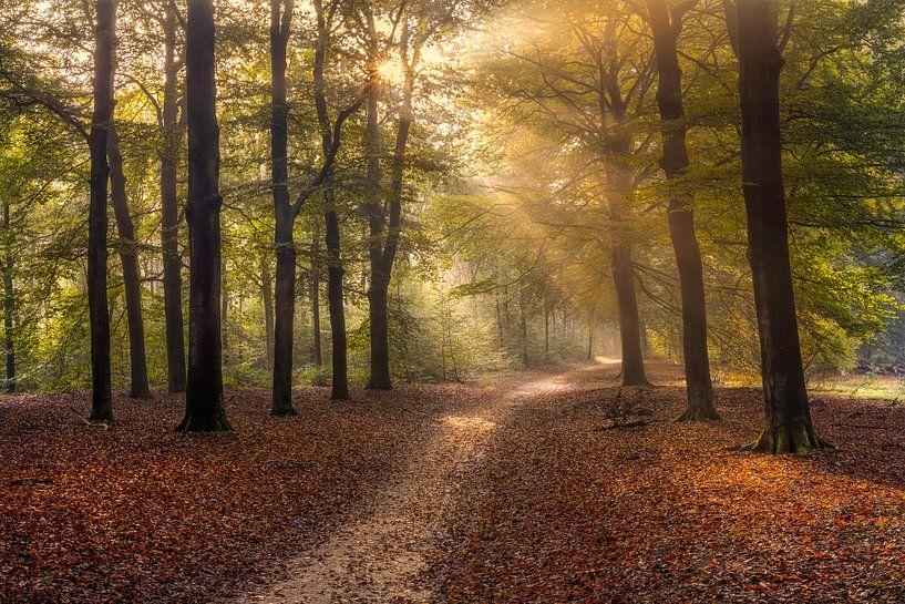 Op zoek naar het licht in een herfstbos van Dennisart Fotografie