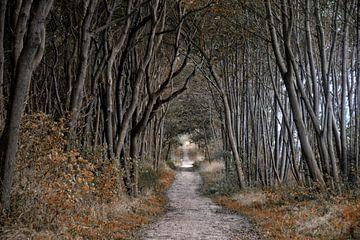 Wald Schwarzer Busch Insel Poel von Joachim G. Pinkawa