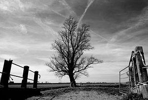 The Lone Tree van