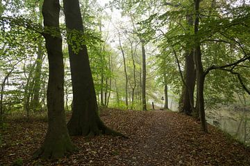 Herfst o phet jaagpad langs de Kromme Rijn van Marijke van Eijkeren