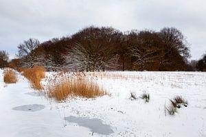 Bevroren sloot en sneeuw landschap in Rotterdam
