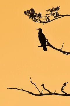 Gouden uur van Paul Arentsen
