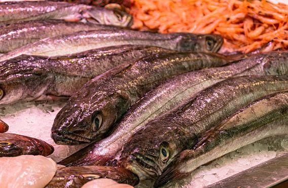 Verse Vis in het Mercado Central in Cadiz