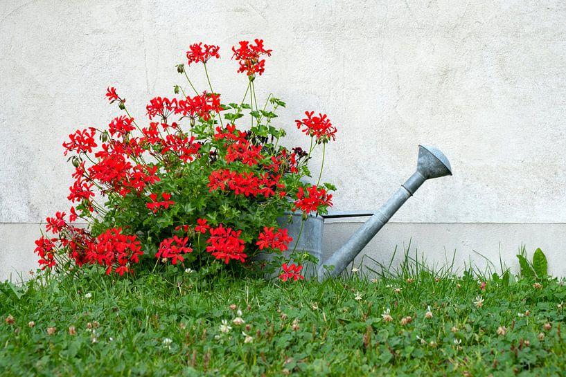 Blumengießkanne II von Andreas Müller