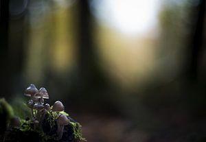 Herfstbos met paddenstoelen