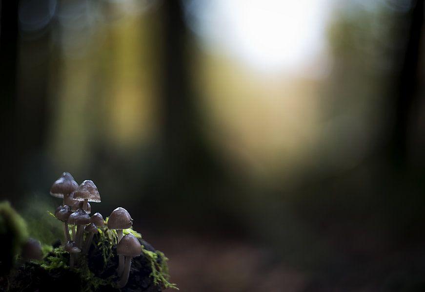 Herfstbos met paddenstoelen van Gonnie van de Schans