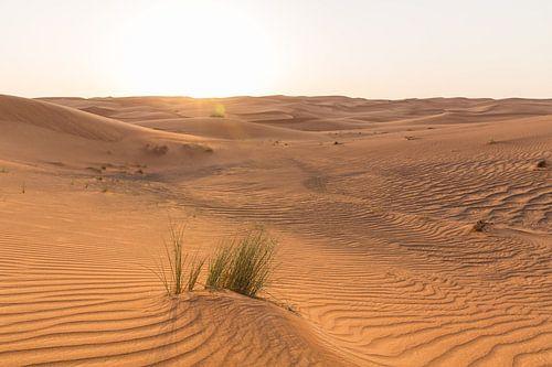 Rood zand in de woestijn bij Dubai