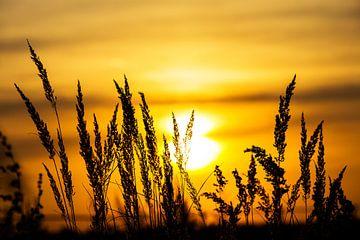 Plantensilhouetten bij zonsondergang van Frank Herrmann