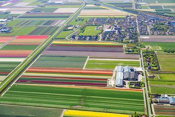 Blumenzwiebelfarm von Robert Riewald