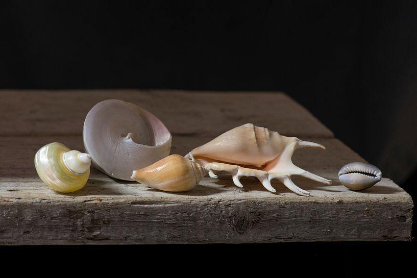 Muscheln im Licht von Roderick van de Berg