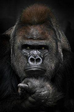 Verärgertes Denken mit gefalteten Händen unter dem Kinn eines starken männlichen Gorillas, Porträt N von Michael Semenov
