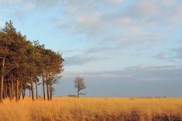 stilleven, pijpenstrootje in de avondzon van Wim vd Neut