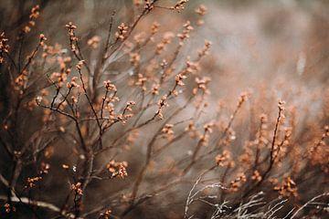 Prachtige herfst tinten in het bos van Holly Klein Oonk