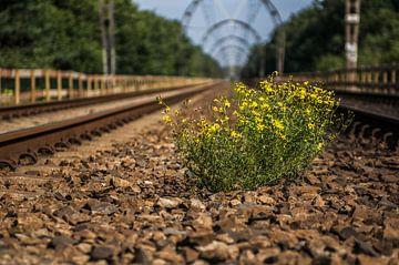 Een plantje op het spoor van Hilversum van Leon Schijf
