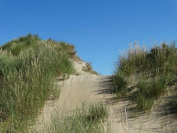 Hollandse Duinen van Brigitte Koster