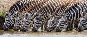 Zebrapool van